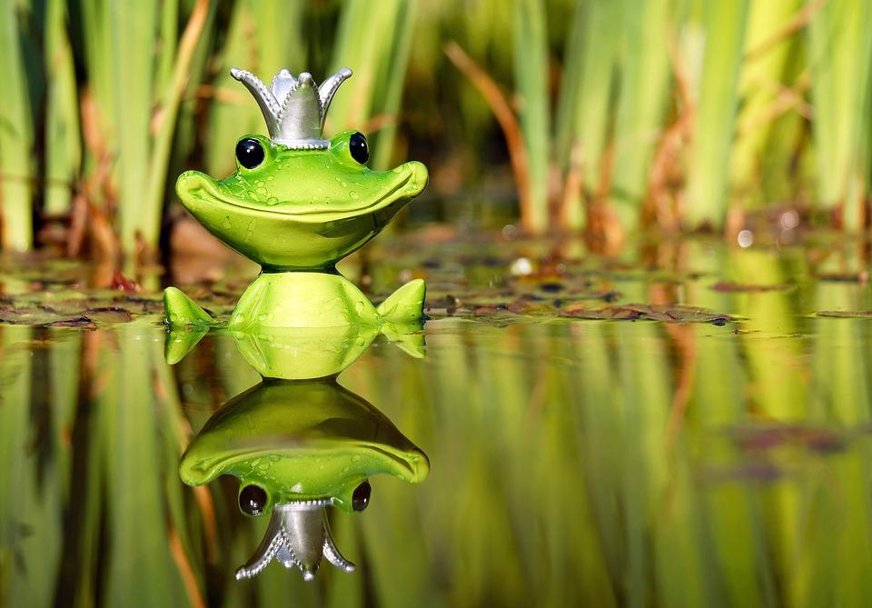 frosch wasserspeier teich