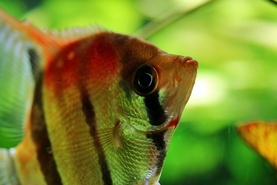 abdeckung 80x35 aquarium kaufen