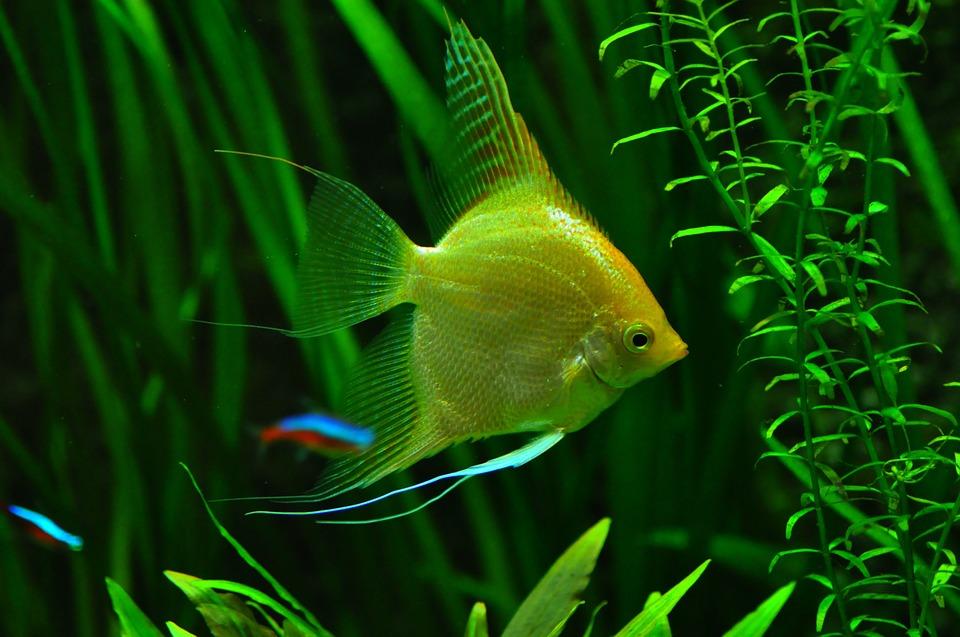 diffuser aquarium