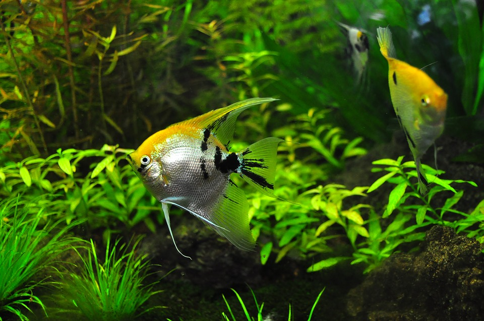 dünger aquarium