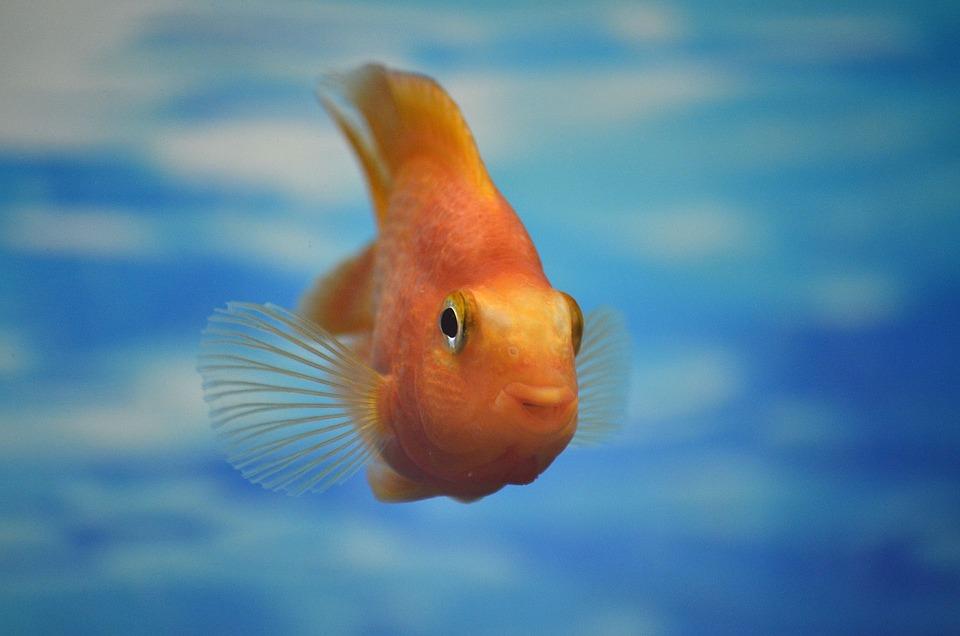 kühler aquarium