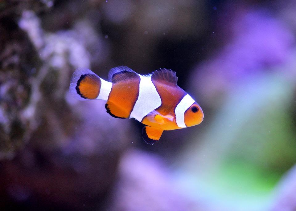 aquariummatte