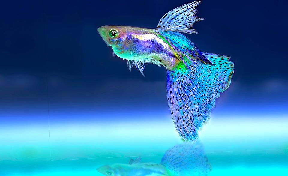 mulmsauger aquarium