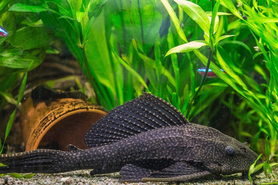 reinigungsset aquarium