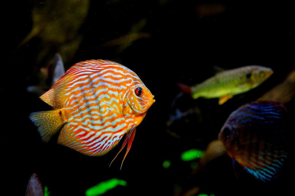 luftausströmer aquarium kaufen