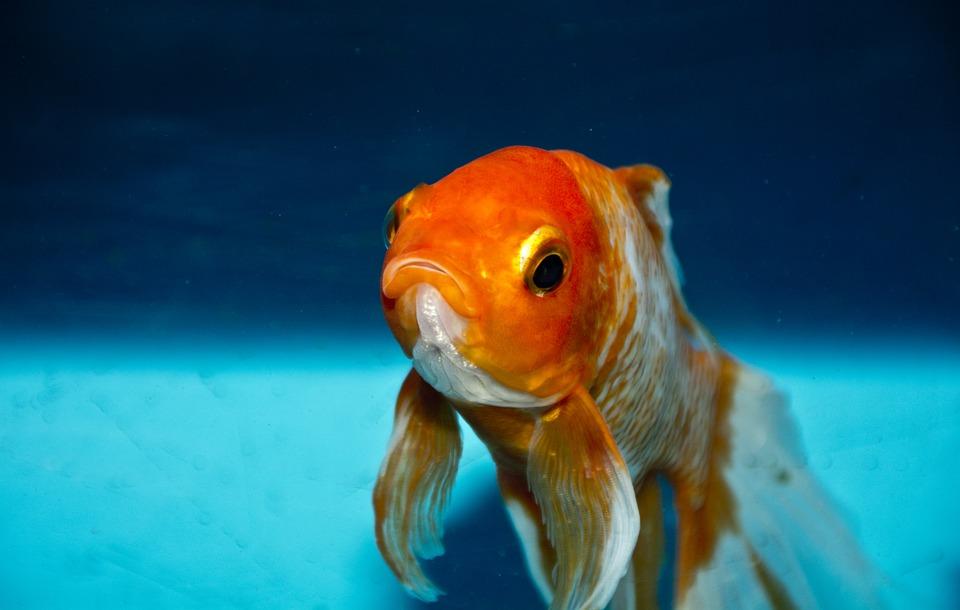 oberflächenabsauger Aquarium