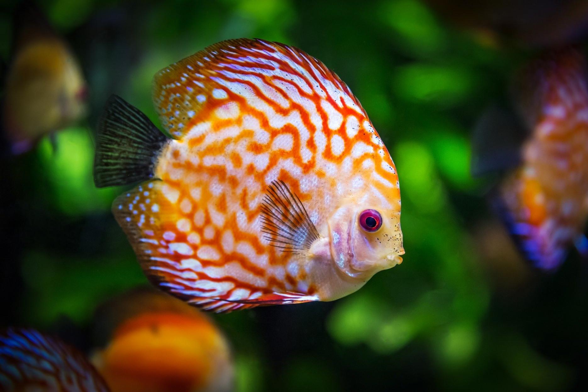 aquarium kaufen