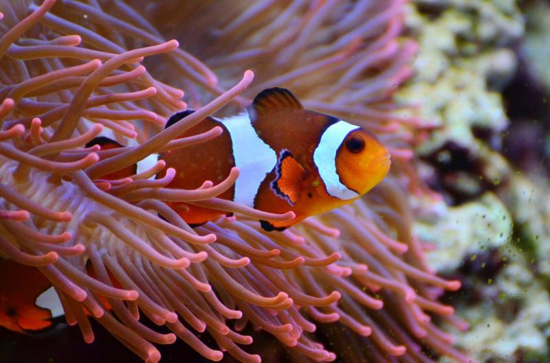 Verschiedene Arten von Fischfutter