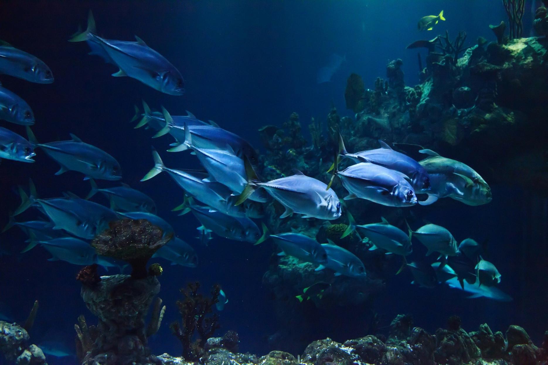 aquarium komplettset